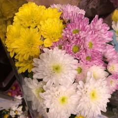 スーパーマーケット/花屋さんの花/ライフ/地元のオススメ 2、2019年8月7日、トナリエの花屋さ…(7枚目)