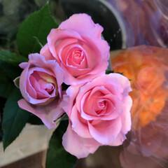 よってって/花屋さんの花/ありがとう/アクセサリー収納/ピアス収納/ネックレス収納/... 2020年7月22日、よってって店、花屋…(9枚目)