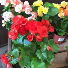 フォト投稿テーマ大募集!/花屋さんの花/コーナン/次のコンテストはコレだ! 1、2019年10月18日、コーナンの花…(4枚目)