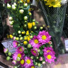 スーパーマーケット/花屋さんの花/至福のひととき/ライフ 3、2019年7月2日、トナリエの花屋さ…(8枚目)
