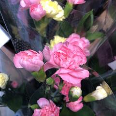 わたしのお盆/スーパーマーケット/花屋さんの花/ライフ 1、2019年8月18日、トナリエの花屋…(4枚目)