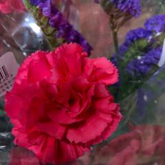 ライフ/至福のひととき/花屋さんの花/スーパーマーケット 1、2019年7月4日、トナリエの花屋さ…(8枚目)