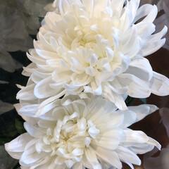 花屋さんの花/ありがとう/よってって/七夕飾り/季節インテリア/七夕インテリア/... 3、2020年6月26日、本日、久米診療…(8枚目)