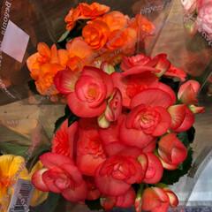 花屋さんの花/スーパーマーケット/ライフ/雨季ウキフォト投稿キャンペーン 2、2019年6月28日、ライフの花屋さ…(5枚目)