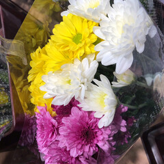パシャリおでかけワンショット/ライフ/花屋さんの花/スーパーマーケット/おでかけワンショット 3、2019年7月28日、トナリエの花屋…(10枚目)
