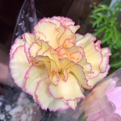 スーパーマーケット/花屋さんの花/ライフ/パシャリおでかけワンショット/おでかけワンショット 2、2019年7月28日、トナリエの花屋…(1枚目)