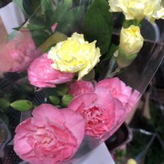 わたしのお盆/スーパーマーケット/花屋さんの花/ライフ 1、2019年8月18日、トナリエの花屋…(5枚目)