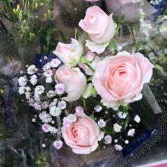 スーパーマーケット/花屋さんの花/ライフ/雨季ウキフォト投稿キャンペーン 2、2019年6月30日、トナリエの花屋…(3枚目)