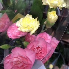 わたしのお盆/スーパーマーケット/花屋さんの花/ライフ 1、2019年8月18日、トナリエの花屋…