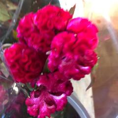 よってって/花屋さんの花/ありがとう/アクセサリー収納/ピアス収納/ネックレス収納/... 2020年7月22日、よってって店、花屋…(10枚目)
