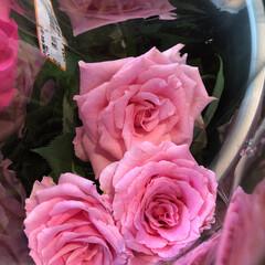 よってって/花屋さんの花/産直市場/残暑見舞い申し上げます/ハンドメイド/プレゼント/... 2021時9月1日(水)、アラニスより愛…(6枚目)