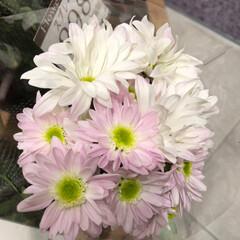花屋さんの花/至福のひととき/スーパーマーケット/ライフ 3、2019年7月7日、トナリエの花屋さ…(4枚目)