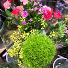 ライフ/至福のひととき/花屋さんの花/スーパーマーケット 3、2019年7月4日、トナリエの花屋さ…(7枚目)