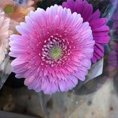 至福のひととき/花屋さんの花/よってって 1、2019年7月12日、よってっての花…(4枚目)