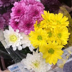 パシャリおでかけワンショット/ライフ/花屋さんの花/スーパーマーケット/おでかけワンショット 3、2019年7月28日、トナリエの花屋…(9枚目)