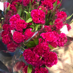 よってって/花屋さんの花/ありがとう/アクセサリー収納/ピアス収納/ネックレス収納/... 2020年7月22日、よってって店、花屋…(1枚目)
