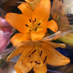ありがとう/花屋さんの花/よってって/七夕飾り/季節インテリア/七夕インテリア/... 4、2020年6月26日、本日、久米診療…(1枚目)