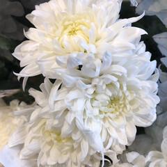 花屋さんの花/ありがとう/よってって/七夕飾り/季節インテリア/七夕インテリア/... 3、2020年6月26日、本日、久米診療…(7枚目)