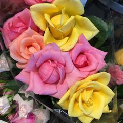 至福のひととき/花屋さんの花/よってって 1、2019年7月12日、よってっての花…(8枚目)