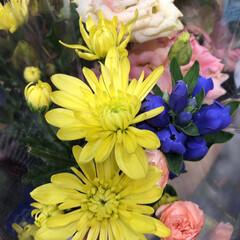 わたしのお盆/スーパーマーケット/花屋さんの花/ライフ 3、2019年8月18日、トナリエの花屋…(7枚目)