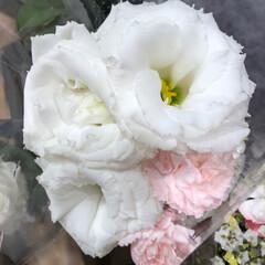 スーパーマーケット/花屋さんの花/至福のひととき/ライフ 2、2019年7月4日、トナリエの花屋さ…(10枚目)