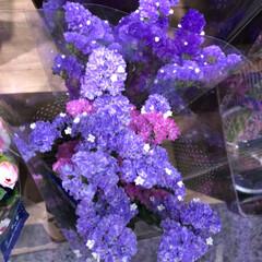 至福のひととき/花屋さんの花/スーパーマーケット/ライフ 2、2019年7月2日、トナリエの花屋さ…(9枚目)