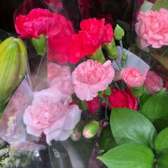 スーパーマーケット/花屋さんの花/ライフ/雨季ウキフォト投稿キャンペーン 2、2019年6月30日、トナリエの花屋…(2枚目)