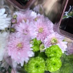スーパーマーケット/花屋さんの花/至福のひととき/ライフ 3、2019年7月2日、トナリエの花屋さ…(5枚目)