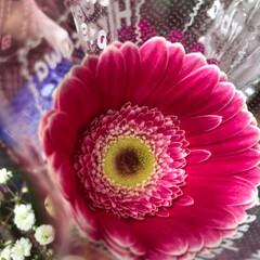 至福のひととき/花屋さんの花/スーパーマーケット/ライフ 2、2019年7月2日、トナリエの花屋さ…(3枚目)