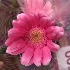 スーパーマーケット/花屋さんの花/ライフ/パシャリおでかけワンショット/おでかけワンショット 2、2019年7月28日、トナリエの花屋…(10枚目)