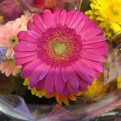 至福のひととき/花屋さんの花/よってって 1、2019年7月12日、よってっての花…(6枚目)