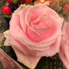 ライフ/スーパーマーケット/至福のひととき/花屋さんの花 2、2019年7月7日、トナリエの花屋さ…