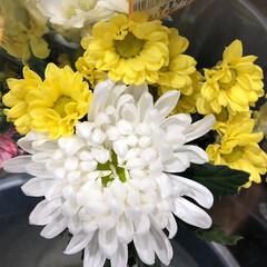 ありがとう/花屋さんの花/よってって/アクセサリー収納/ピアス収納/ネックレス収納/... 先日、買い物のついでに。よってって店。花…(1枚目)