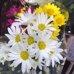 スーパーマーケット/花屋さんの花/ライフ/地元のオススメ 2、2019年8月7日、トナリエの花屋さ…(6枚目)