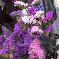 ライフ/花屋さんの花/スーパーマーケット/わたしのお盆 2、2019年8月18日、トナリエの花屋…(10枚目)