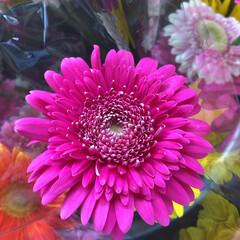 よってって/花屋さんの花/産直市場/残暑見舞い申し上げます/ハンドメイド/プレゼント/... 2021時9月1日(水)、アラニスより愛…(2枚目)