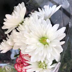 スーパーマーケット/花屋さんの花/至福のひととき 5、2019年7月12日、万代の花屋さん…(8枚目)