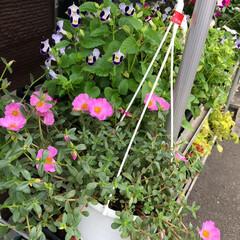 残暑見舞い申し上げます/産直市場/花屋さんの花/よってって/インテリア/プチプラ/... 2021年8月7日、美しい花を見てカメラ…(5枚目)
