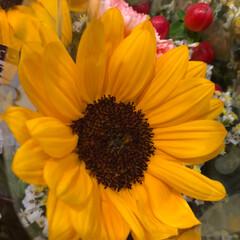 ライフ/花屋さんの花/スーパーマーケット/雨季ウキフォト投稿キャンペーン 3、2019年6月28日、トナリエの花屋…