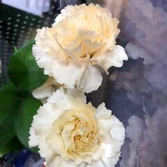 ライフ/至福のひととき/花屋さんの花/スーパーマーケット 3、2019年7月4日、トナリエの花屋さ…(4枚目)