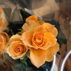 よってって/花屋さんの花/産直市場/残暑見舞い申し上げます/ハンドメイド/プレゼント/... 2021時9月1日(水)、アラニスより愛…(7枚目)