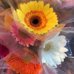 よってって/花屋さんの花/ありがとう/アクセサリー収納/ピアス収納/ネックレス収納/... 2020年7月22日、よってって店、花屋…(4枚目)