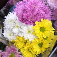 スーパーマーケット/花屋さんの花/ライフ/地元のオススメ 2、2019年8月7日、トナリエの花屋さ…(3枚目)