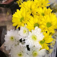 花屋さんの花/至福のひととき/スーパーマーケット/ライフ 3、2019年7月7日、トナリエの花屋さ…(3枚目)