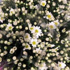 至福のひととき/花屋さんの花/よってって 1、2019年7月12日、よってっての花…