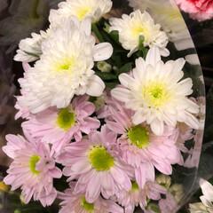 ライフ/至福のひととき/花屋さんの花/スーパーマーケット 3、2019年7月4日、トナリエの花屋さ…(10枚目)