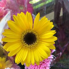 よってって/花屋さんの花/産直市場/残暑見舞い申し上げます/ハンドメイド/プレゼント/... 2021時9月1日(水)、アラニスより愛…(1枚目)