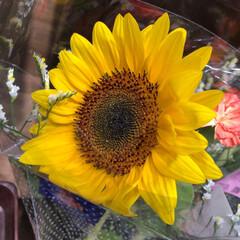スーパーマーケット/花屋さんの花/ライフ/パシャリおでかけワンショット/おでかけワンショット 2、2019年7月28日、トナリエの花屋…(5枚目)