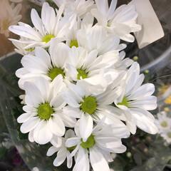 ありがとう/花屋さんの花/よってって/アクセサリー収納/ピアス収納/ネックレス収納/... 先日、買い物のついでに。よってって店。花…(2枚目)