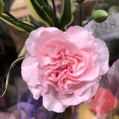 花屋さんの花/スーパーマーケット/ライフ/雨季ウキフォト投稿キャンペーン 2、2019年6月28日、ライフの花屋さ…(10枚目)
